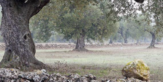 Vinos y Aceites Suñer - Aceites de Cataluña - Bodega y molino familiar especializado en la agricultura ecológica - Aceites de variedades Arbequina, Empeltre y Hoja de Sauce - Aceite certificado por el Consejo Catalán de Producción Agraria Ecológica (CCPAE)